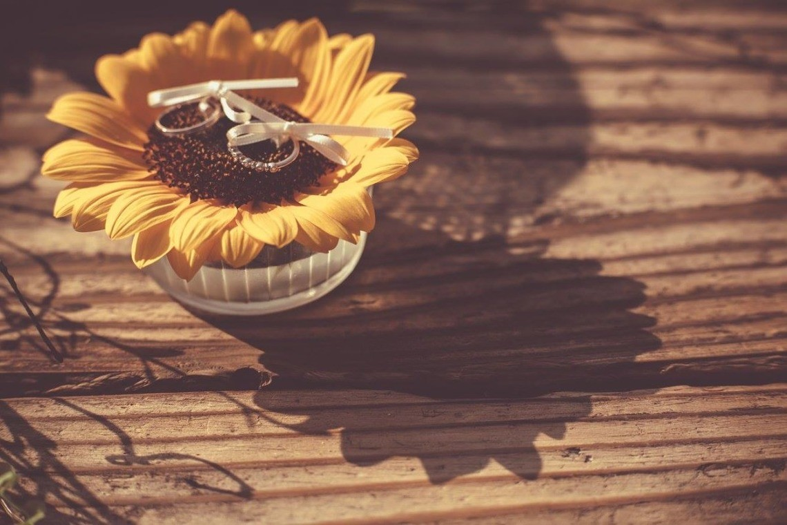wedding rings on the sunflower ♡ — Photo by GRAPHYS