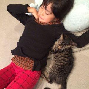 日本猫3 | Fanimal(ファニマル)