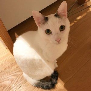 日本猫4 | Fanimal(ファニマル)