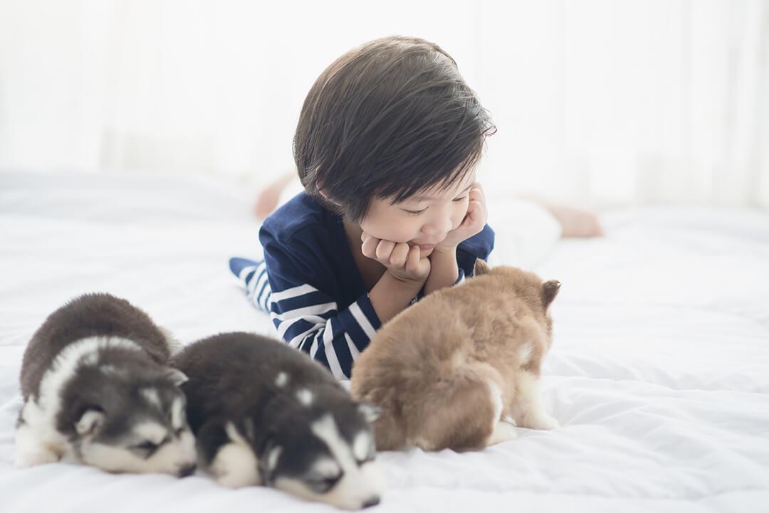 少年と仔犬たち | Fanimal(ファニマル)
