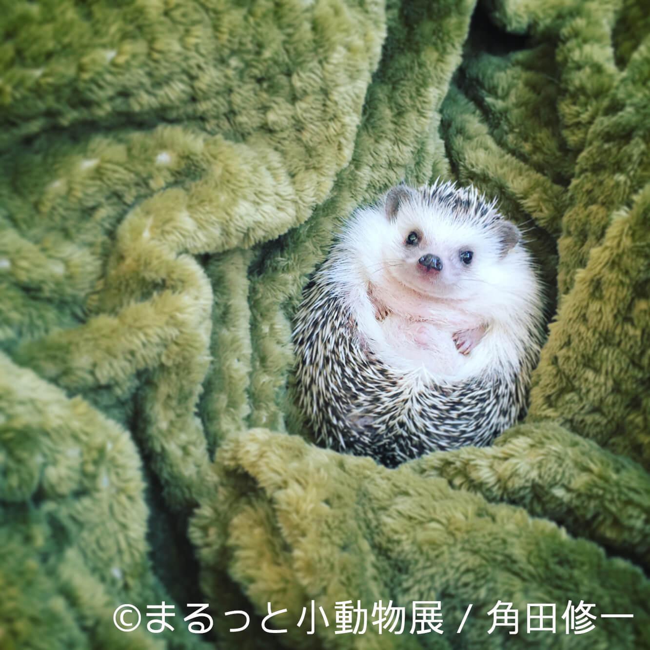 角田修一 | まるっと小動物展 | Fanimal(ファニマル)
