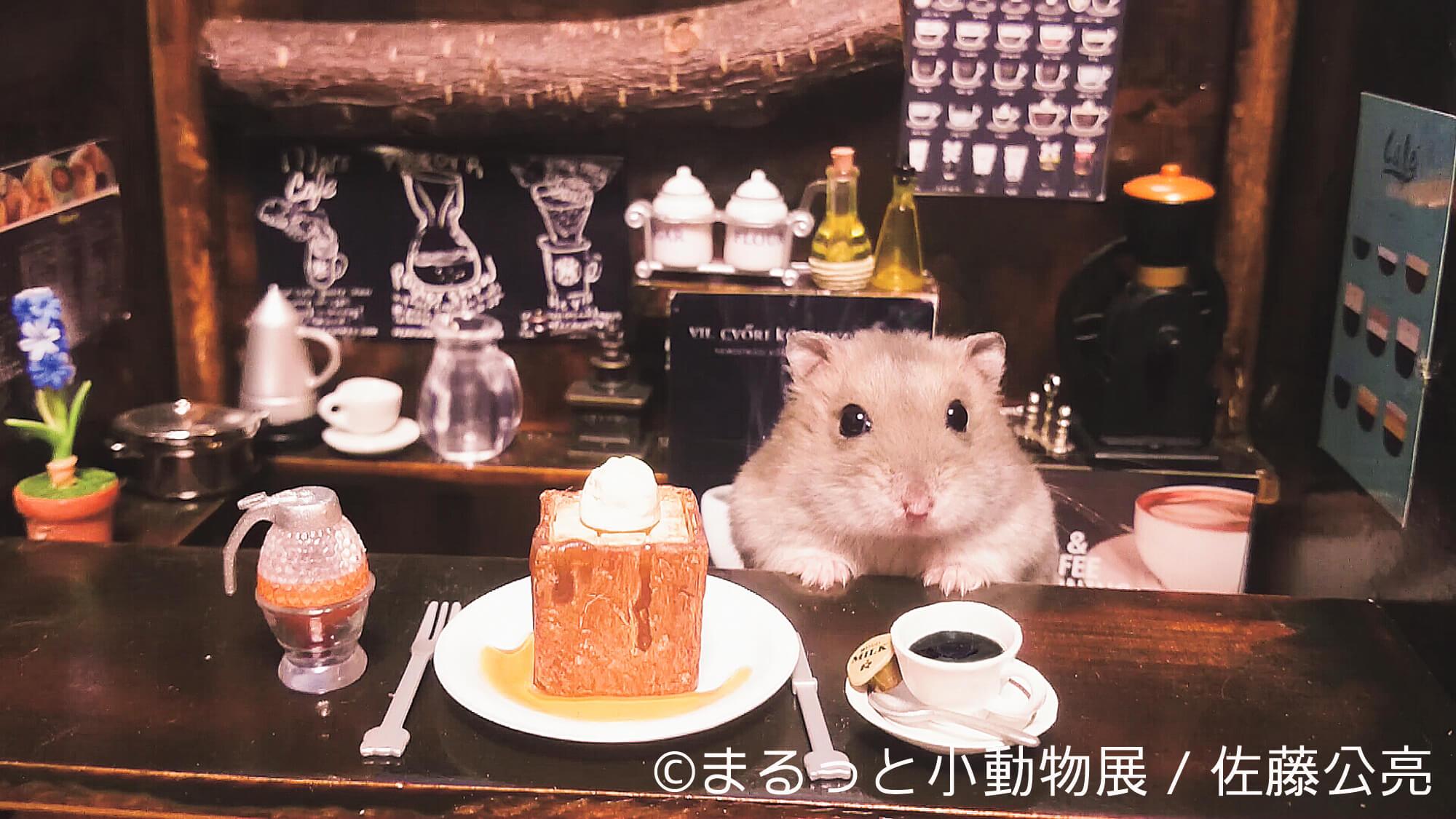 佐藤公亮 | まるっと小動物展 | Fanimal(ファニマル)