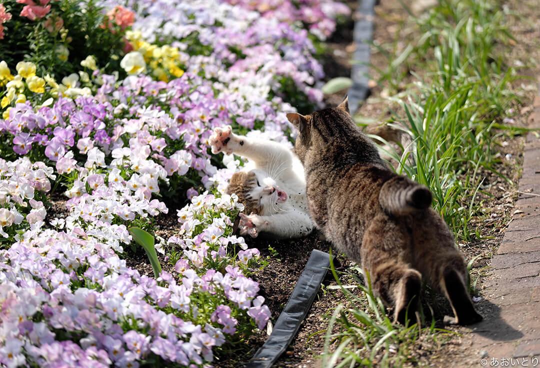あおいとり写真展「にゃんぽんとれ 〜猫たちのポートレート〜」 | Fanimal(ファニマル)