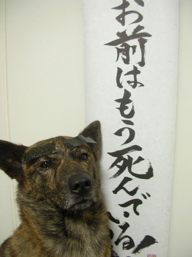 飼い主は見た!犬猫生態図鑑 甲斐犬3 | Fanimal(ファニマル)