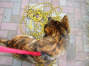 飼い主は見た!犬猫生態図鑑 甲斐犬5 | Fanimal(ファニマル)