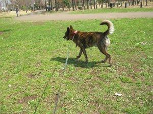 飼い主は見た!犬猫生態図鑑 甲斐犬2 | Fanimal(ファニマル)