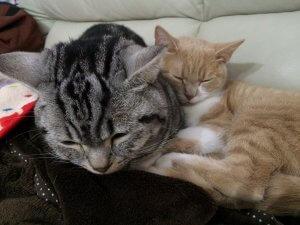 猫のさかり(発情期)と避妊手術2 | Fanimal(ファニマル)