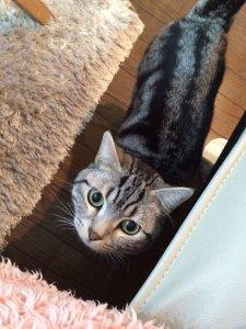 猫の鳴き声3