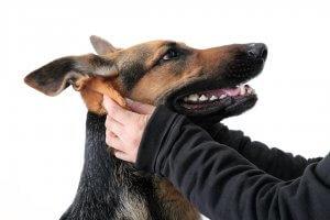 犬と人と-共に生きる しつけ3 | Fanimal(ファニマル)