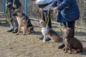犬と人と-共に生きる しつけ1 | Fanimal(ファニマル)