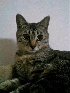 猫の予防接種とその効果0 | Fanimal(ファニマル)