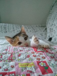 猫の予防接種とその効果1 | Fanimal(ファニマル)