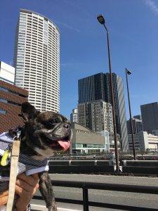 おっとり茉菜との大阪中之島探訪2 | Fanimal(ファニマル)