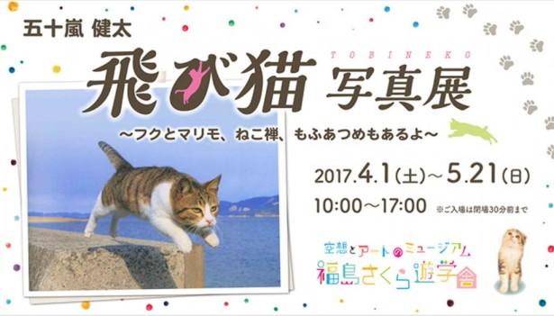 飛び猫写真展