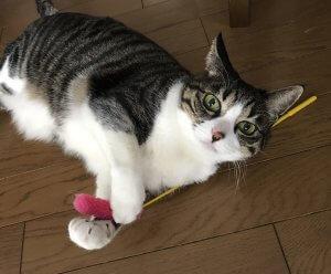 猫との遊び方0 | Fanimal(ファニマル)