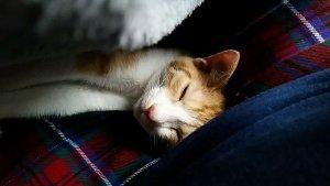 リラックスした表情で寝るむぎ | Fanimal(ファニマル)