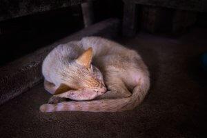 猫の下痢対策 | Fanimal(ファニマル)
