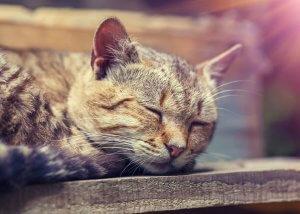 猫の嘔吐3 | Fanimal(ファニマル)