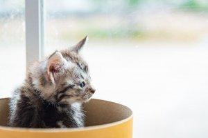 猫の嘔吐1 | Fanimal(ファニマル)