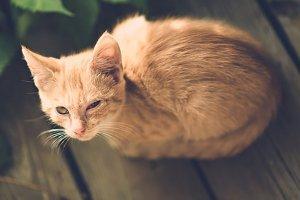 猫の目の病気1 | Fanimal(ファニマル)