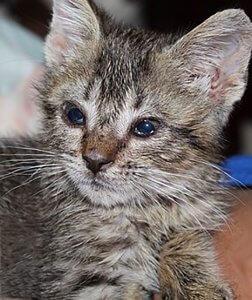 猫の目の病気2 | Fanimal(ファニマル)