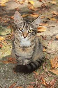 猫の目の病気3 | Fanimal(ファニマル)