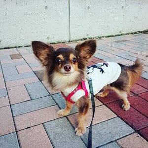 ミックス犬1 | Fanimal(ファニマル)