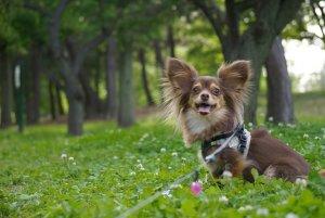 ミックス犬2 | Fanimal(ファニマル)