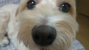 ミックス犬4 | Fanimal(ファニマル)