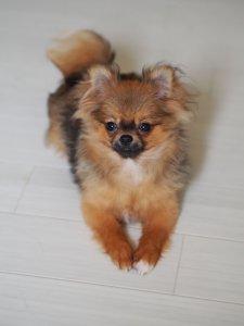 ミックス犬5 | Fanimal(ファニマル)