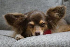 ミックス犬8   Fanimal(ファニマル)