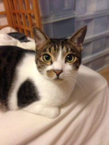 猫の嚢胞腎 症状1 | Fanimal(ファニマル)