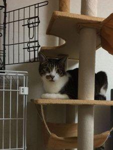 猫の嚢胞腎④-まとめ3 | Fanimal(ファニマル)