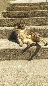 猫の毛球症 | Fanimal(ファニマル)