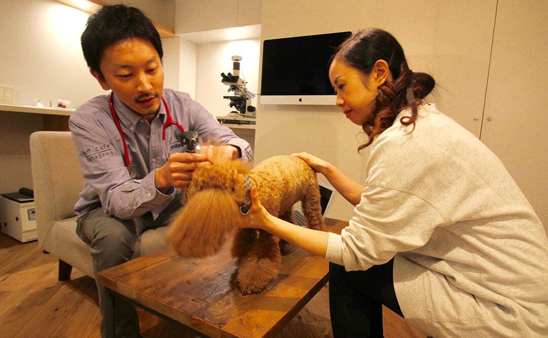 コーヒーやビールを飲みながら、皮膚科獣医師さんセミナーで愛犬のためにお勉強 | Fanimal(ファニマル)