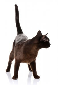 猫のしっぽ2 | Fanimal(ファニマル)