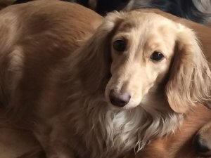 犬の繁殖期1 | Fanimal(ファニマル)
