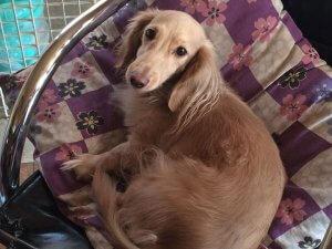犬の避妊去勢手術について考える1 | Fanimal(ファニマル)
