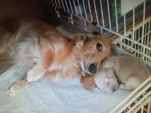 犬の避妊去勢手術について考える2 | Fanimal(ファニマル)
