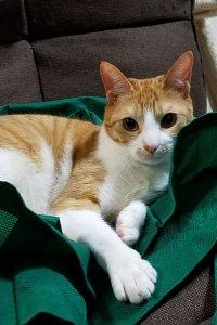 緑の袋の上に座るむぎ | Fanimal(ファニマル)
