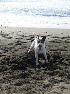 犬はなぜ穴を掘る2 | Fanimal(ファニマル)