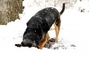 犬はなぜ穴を掘る1 | Fanimal(ファニマル)