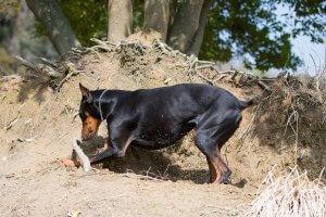 犬はなぜ穴を掘る3 | Fanimal(ファニマル)