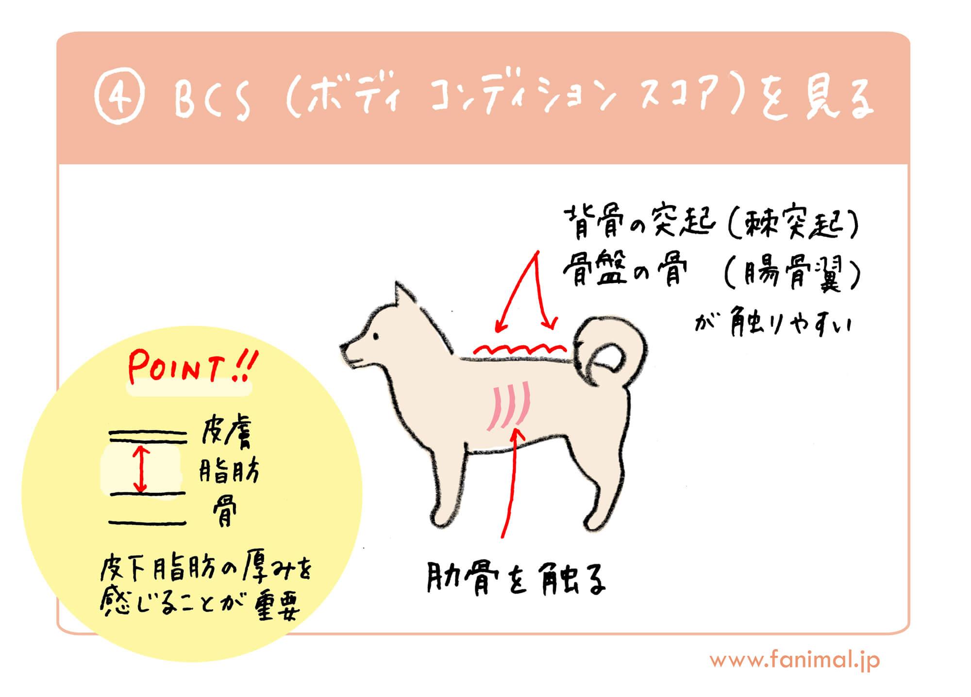 BCS(ボディ・コンディション・スコア) | Fanimal(ファニマル)
