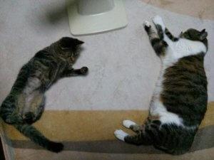 猫のフィラリア症2 | Fanimal(ファニマル)