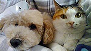 猫のフィラリア症4 | Fanimal(ファニマル)