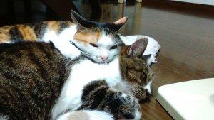 猫のフィラリア症1 | Fanimal(ファニマル)