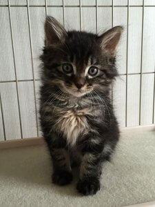 トムが子猫の時 | Fanimal(ファニマル)