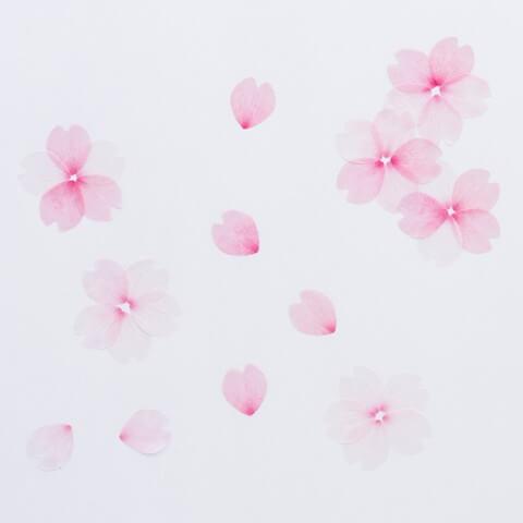 桜の花びらのマスキングテープ | Fanimal(ファニマル)