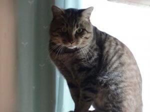 猫エイズの子と暮らす1 | Fanimal(ファニマル)